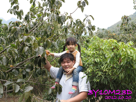 3Y10M23D-1採柿子-14