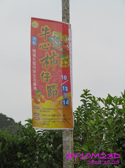 3Y10M23D-1採柿子-47