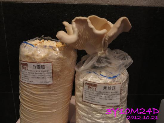 3Y10M24D-秀珍菇收成01