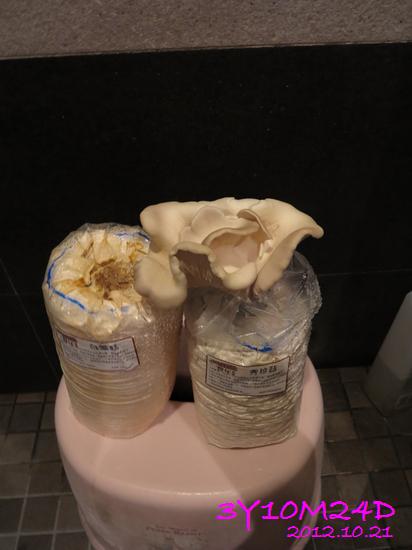 3Y10M24D-秀珍菇收成02