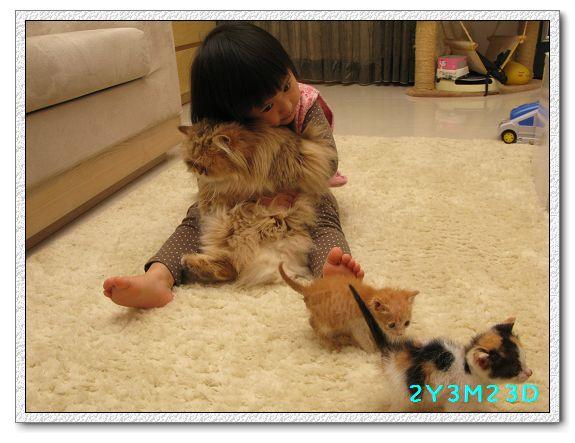 2Y03M23D-小貓07.jpg
