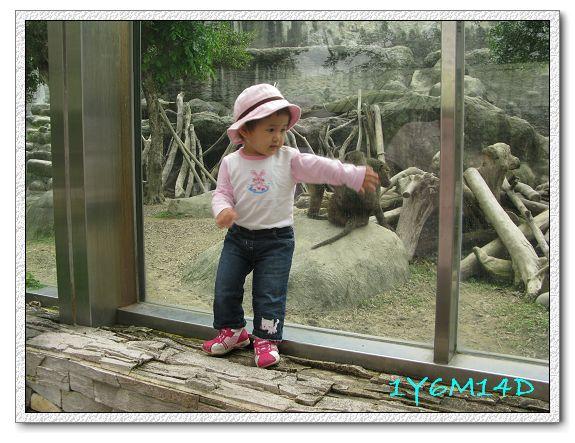 1Y6M14D-06 動物園.jpg