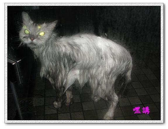 1Y2M14D嘿講洗澡-03.jpg