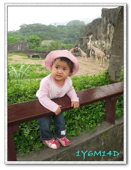 1Y6M14D-34 動物園.jpg