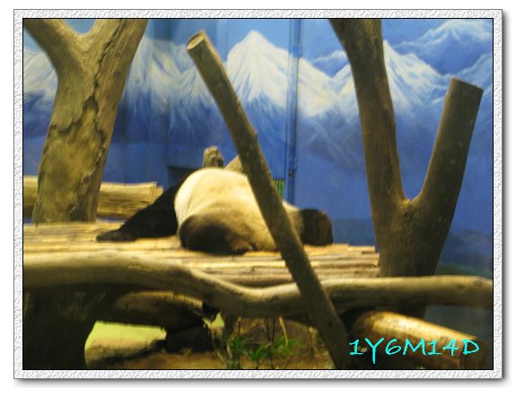 1Y6M14D-41 動物園.jpg