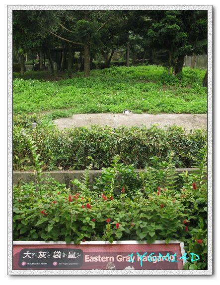 1Y6M14D-40 動物園.jpg