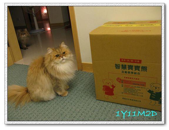 1Y11M02D-05寶寶熊開箱.jpg