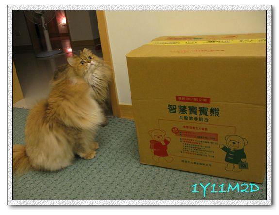 1Y11M02D-06寶寶熊開箱.jpg