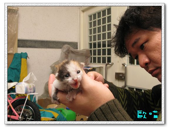 2Y03M01D-小貓04.jpg