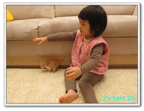 2Y03M23D-小貓01.jpg