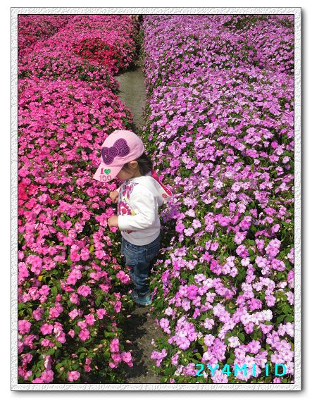 2Y04M11D-中社花園022.jpg