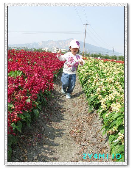2Y04M11D-中社花園098.jpg