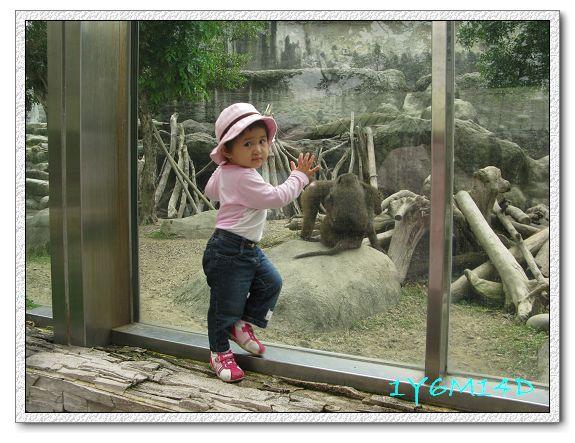 1Y6M14D-08 動物園.jpg