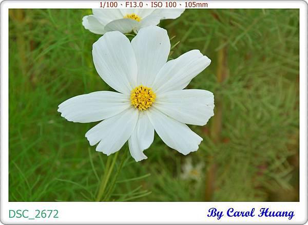 DSC_2672