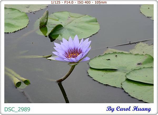 DSC_2989