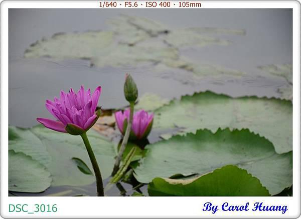 DSC_3016