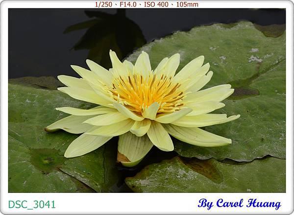 DSC_3041