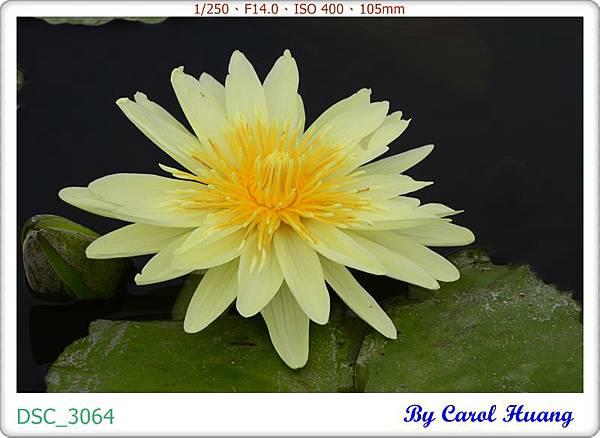 DSC_3064