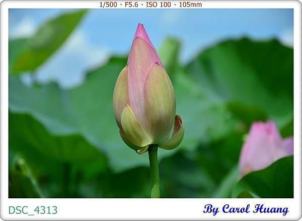 DSC_4313