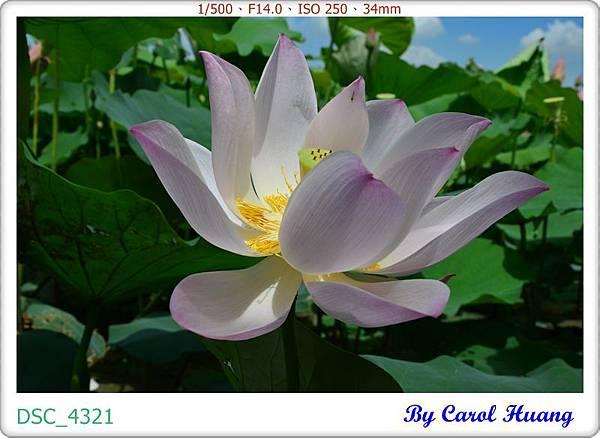 DSC_4321