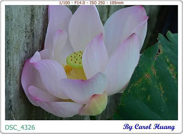 DSC_4326