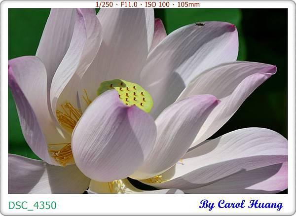 DSC_4350