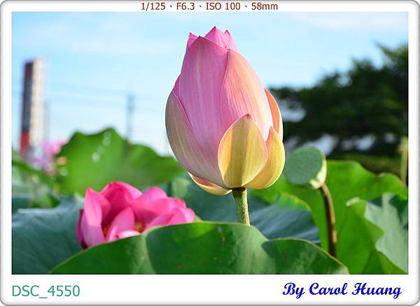 DSC_4550
