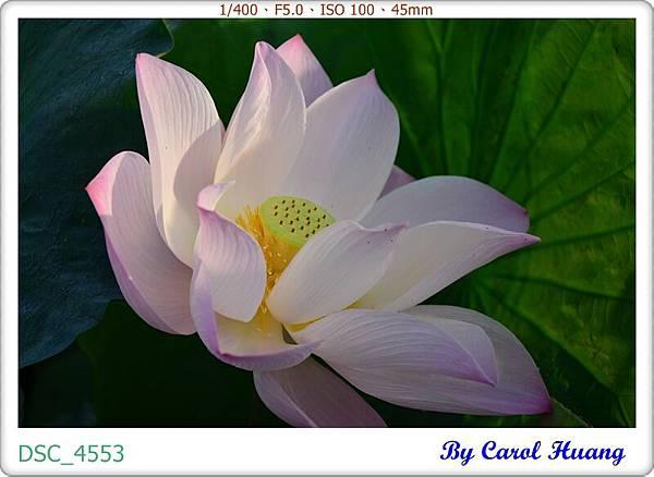 DSC_4553