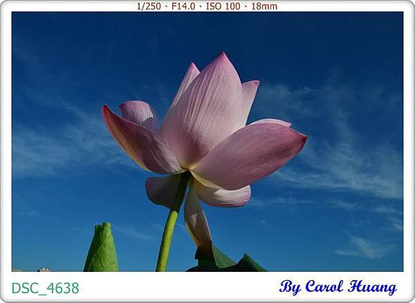 DSC_4638