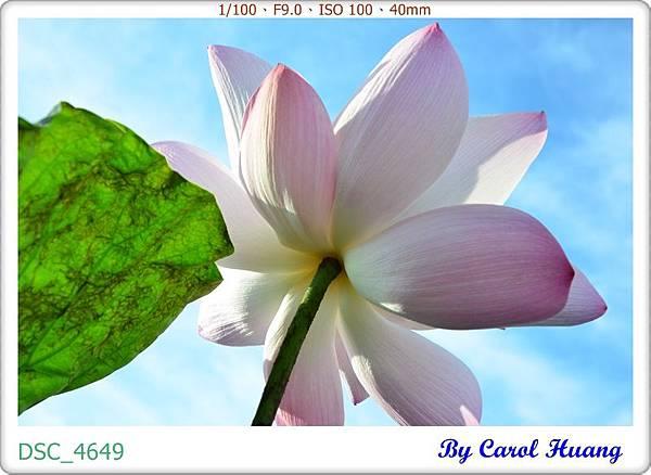 DSC_4649