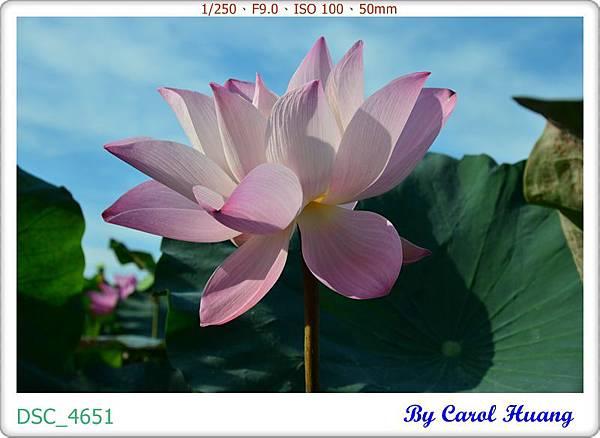 DSC_4651