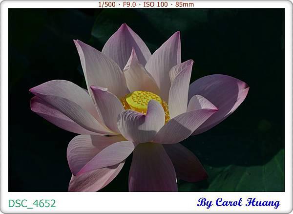 DSC_4652