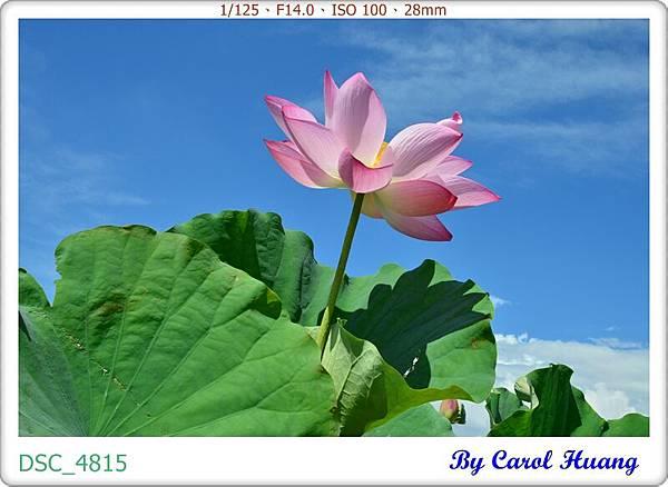 DSC_4815