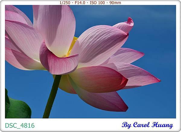 DSC_4816
