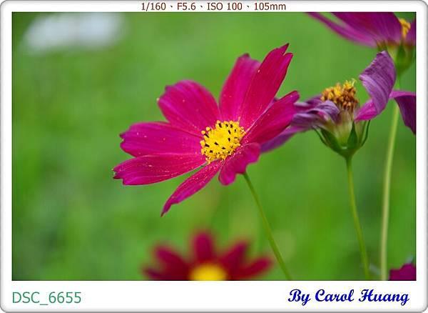 DSC_6655
