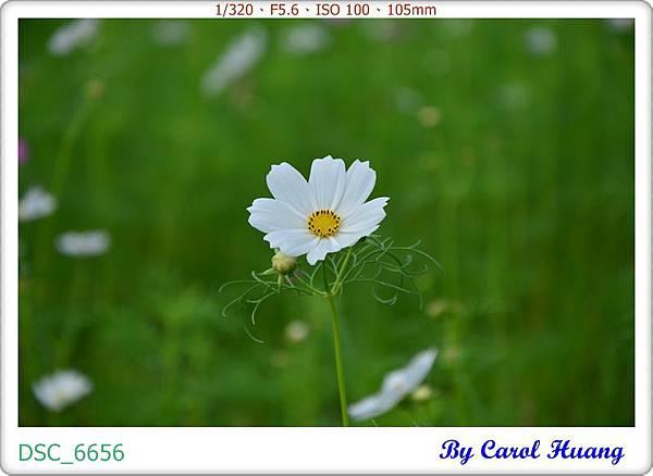 DSC_6656