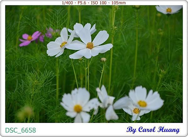 DSC_6658