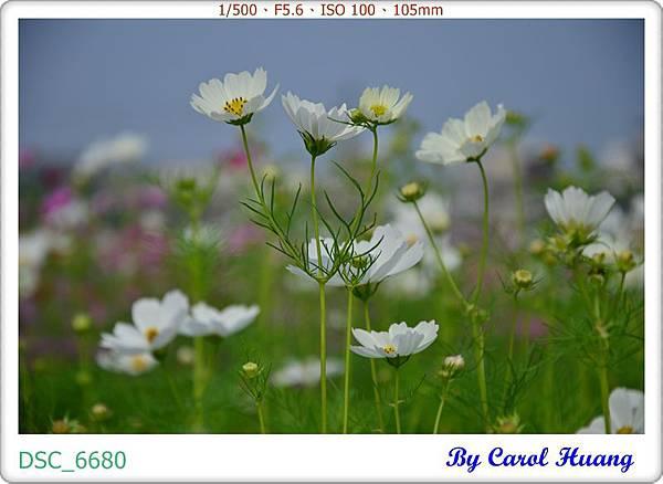 DSC_6680