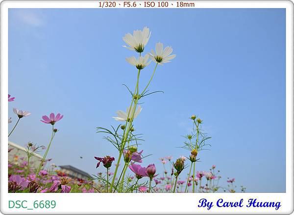 DSC_6689