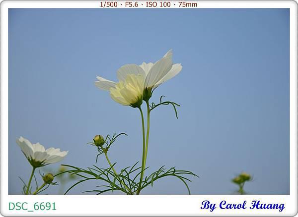DSC_6691
