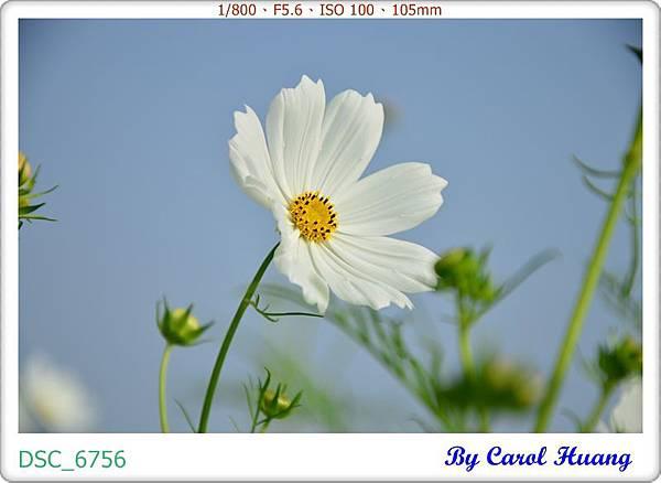DSC_6756