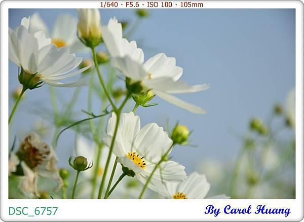 DSC_6757