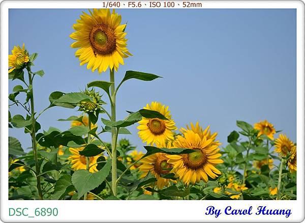 DSC_6890