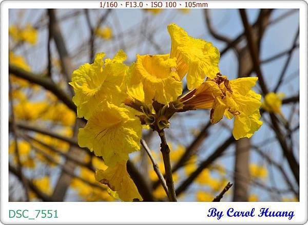 DSC_7551