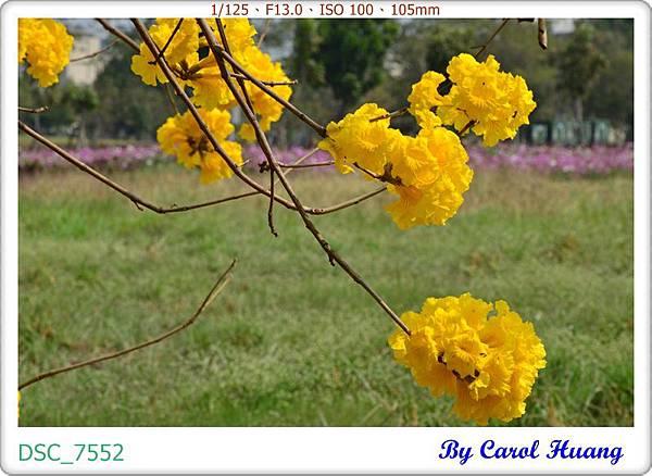 DSC_7552