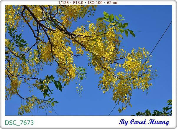 DSC_7673