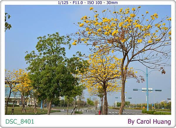 DSC_8401