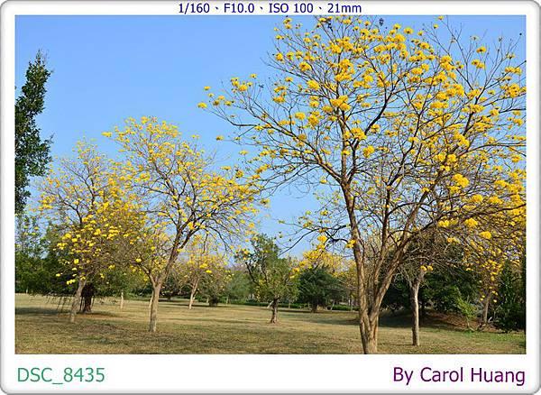 DSC_8435
