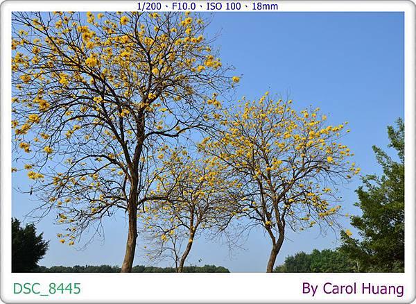 DSC_8445