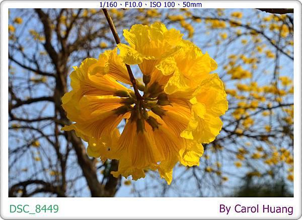 DSC_8449